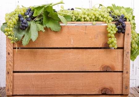 Grapes on vine on antique wooden crate, room for copy space photo