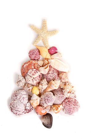 arrangment: Sea shells shaped as a Christmas tree on a white background Stock Photo