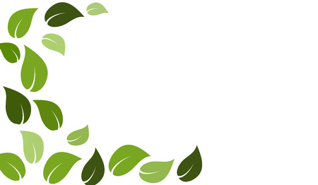 Leaves in shades of green on isolated white background