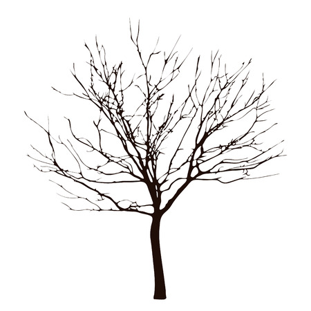 Barren tree on transparent white background