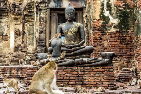 buddha image: A cloud of monkeys playing around Buddha Image.