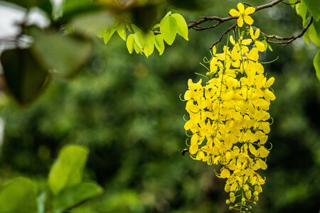 golden shower: Wasp fly around golden shower