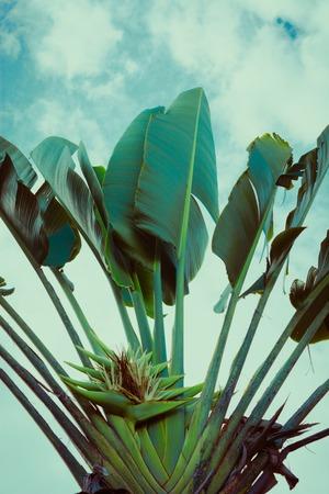 Palm trees under blue sky. Vintage post processed. Фото со стока