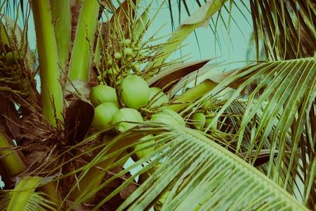 Coconut palm tree under blue sky. Vintage background. Travel card. Retro toned. Soft focus Stok Fotoğraf