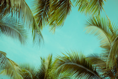Coconut palm tree foliage under sky. Vintage background. Retro toned poster.