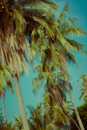 Coconut palm tree under sky. Vintage tropical background. Travel card. Retro toned poster. Tropical vibes. Stok Fotoğraf
