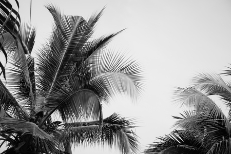 Coconut palm tree under sky. Vintage tropical background. Travel card. Retro toned poster. Black and white