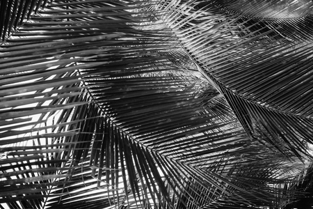 Coconut palm tree under sky. Vintage tropical background. Travel card. Retro toned poster. Black and white Stok Fotoğraf