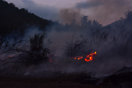 Deforestation of rainforest in Asia. Fire flame and big smoke, close-up. Wildfire while drought. Smoke and air Pollution from agricultural burning farm fields. Stock Photo