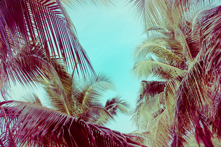 Coconut palm tree foliage under sky. Vintage background. Retro toned poster. 写真素材