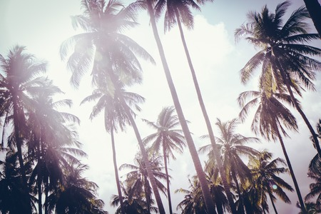 Coconut palm trees in sunset light. Vintage background. Retro toned poster.
