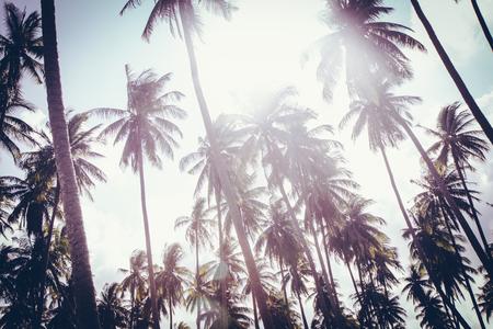 Kokospalmen im Abendlicht. Tropischer Hintergrund der Weinlese. Reisekarte. Retro-getöntes Poster. Tropische Stimmung. Sommerferienkonzept.