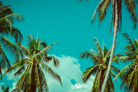 Coconut palm tree under sky. Vintage tropical background. Travel card. Retro toned poster. Stockfoto