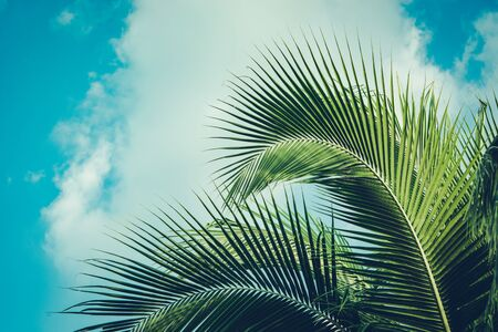 Coconut palm tree under summer sky. Vintage tropical background. Travel card. Retro toned poster. Tropical vibes.
