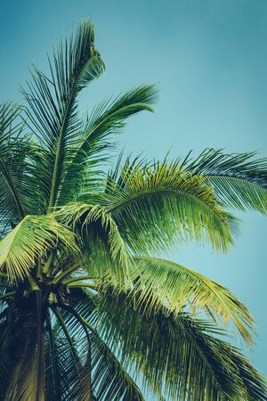 Coconut palm tree foliage under sky. Vintage background. Retro toned poster. Foto de archivo