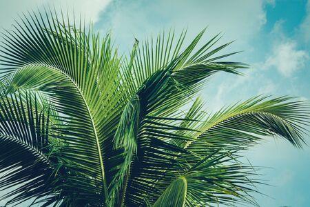 Kokospalm gebladerte onder de hemel. Uitstekende achtergrond. Retro getinte poster. Stockfoto