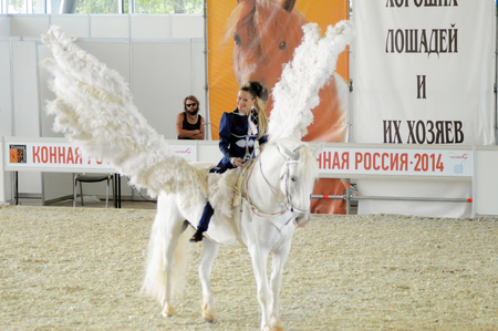horse show: Woman jockey in blue dress International Horse Show. Female rider on a white horse. Pegasus. White Wings