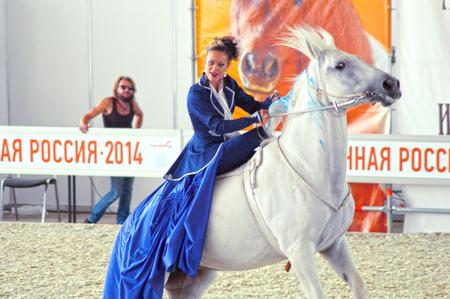buckskin horse: International Equestrian Exhibition During the show. Woman jockey in a dark blue dress on a white horse Editorial