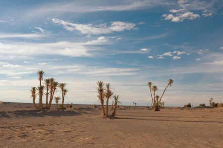 desert sahara Stock Photo - 527666