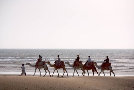 Berber Camel train on the see at sunset, Morocco Stock Photo - 1600562