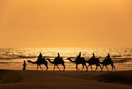 morocco: Tourists ride camels train on the sea at sunset, Morocco