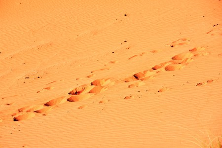 footprints on the sand dunes Stock Photo - 4524301