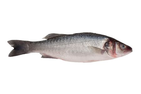 spotted: fresh sea bass
