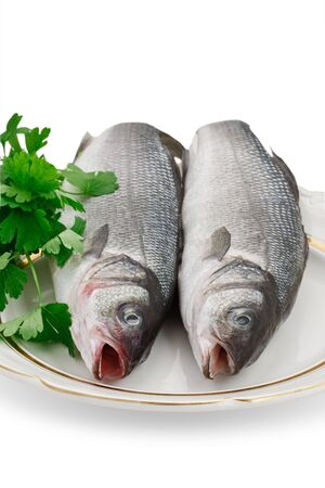 seabass: Two seabass fish on a white plate on a white background. Stock Photo
