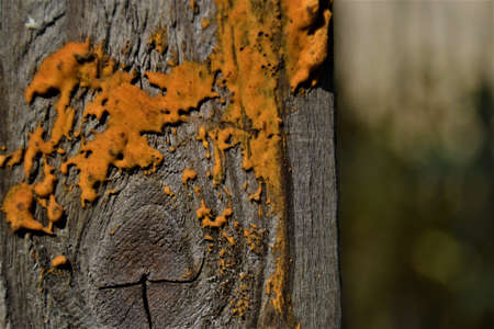 Some views from nature close up. Orange objects on a brown piece of wood with blurred background 写真素材
