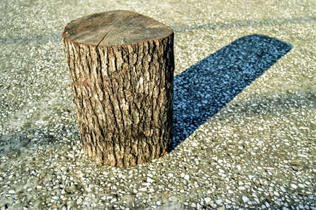 Wet and cut pieces of wood stand on concrete floor. Sunshine lights it and shadows of its to concrete floor. Stok Fotoğraf