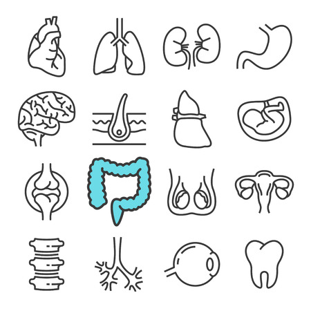Black line Internal Organs icons set. Includes such Icons as Liver, Heart, Embryo.