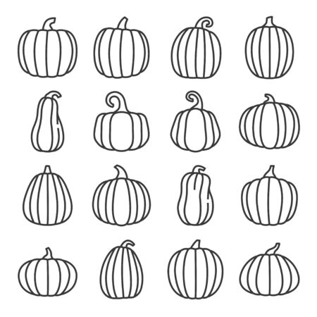 Pumpkin line icons set. Organic food. Vector