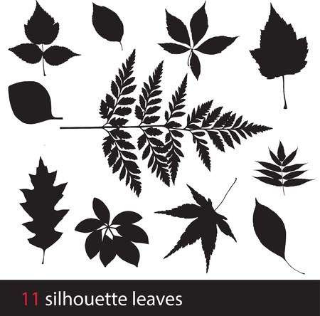 gum: Silhouette leaves Illustration