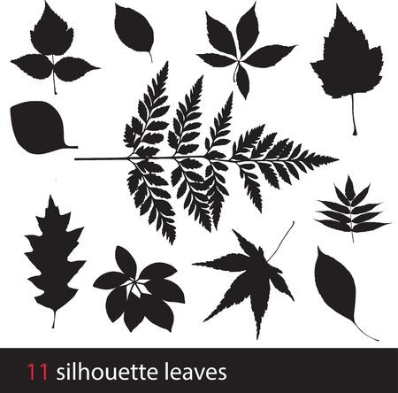 gum tree: Silhouette leaves Illustration