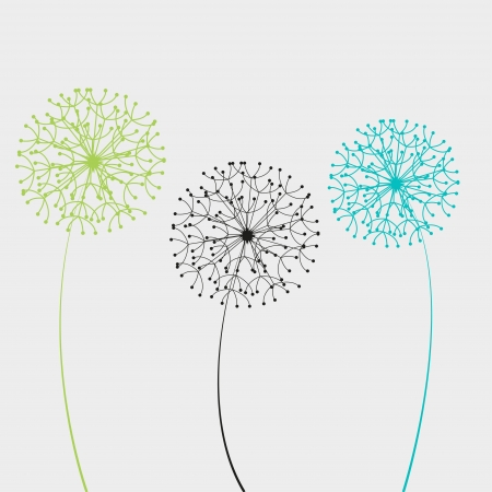 dandelion flower: illustration dandelion