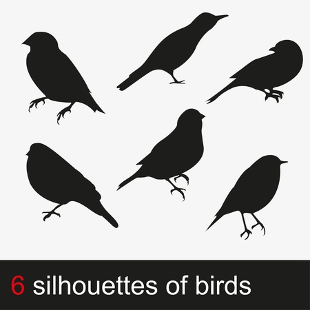 finch: illustration silhouettes of birds