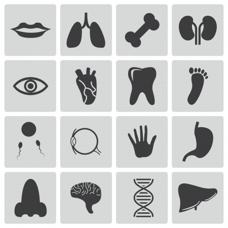Vector black  anatomy  icons set Stock Vector - 22470849
