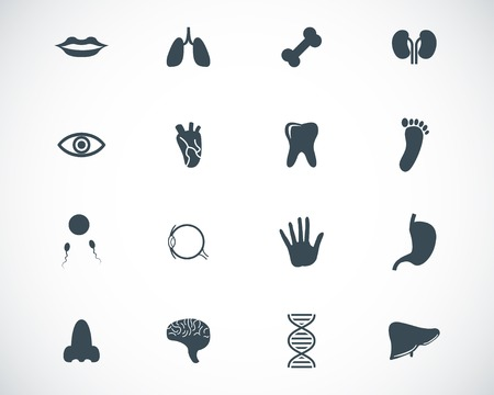 Vector black  anatomy  icons set Vector