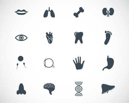 Vector iconos negros anatomía establecen