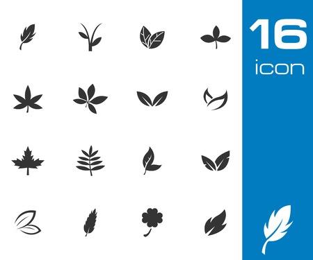 Vector black leaf icons set on white background Vector