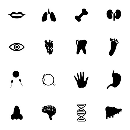 Vector black  anatomy  icons set on white background Stock Vector - 27381305