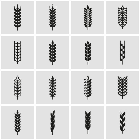 ear: Vector black wheat ear icon set. Wheat ear Icon Object, Wheat ear labels Icon Picture, Wheat ear labels Icon Image - stock vector