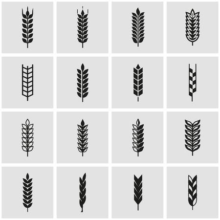 oido: Vector icono de la oreja de trigo negro ajustado. Oído del trigo Icono de objetos, etiquetas Trigo oído Icono Imagen, etiquetas de oreja de trigo icono de imagen - Imagen vectorial