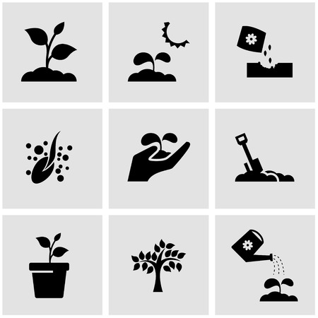 plant growing: black growing icon set. Growing Icon Object, Growing Icon Picture, Growing Icon Image Illustration