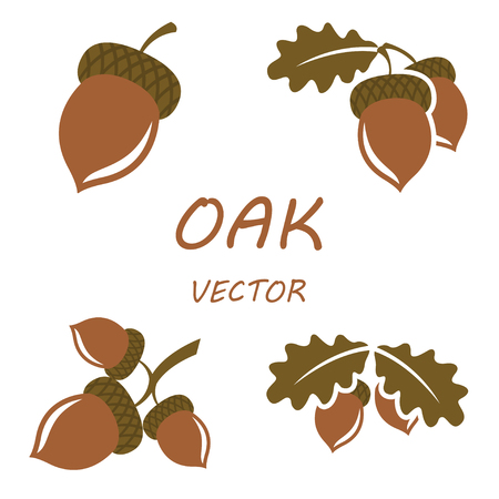 nature silhouette: Vector flat oak icons set on white backgrounds Illustration
