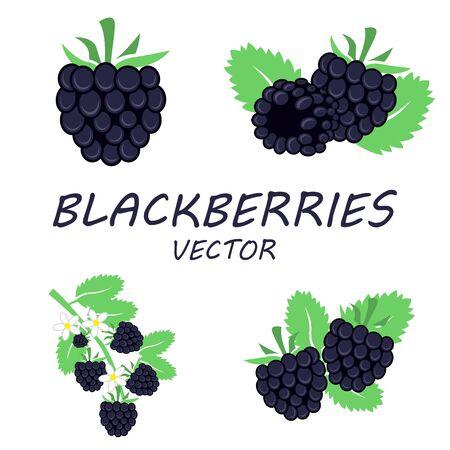 blackberries: Vector flat blackberries icons set on white background Illustration