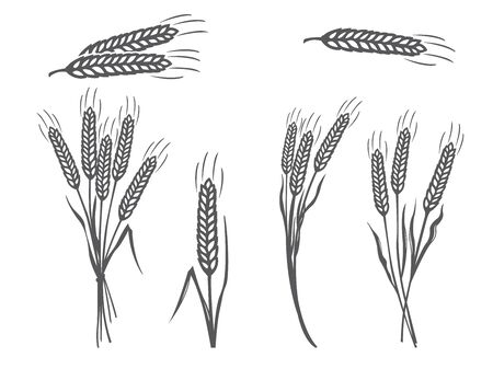Vector Black Wheat Silhouette Icons Set on White Background Ilustrace