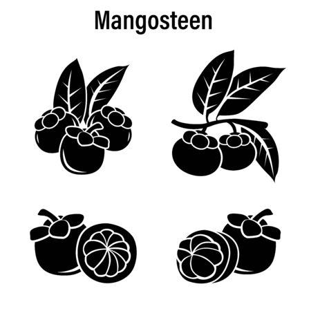 Fresh Mangosteen on a white background.