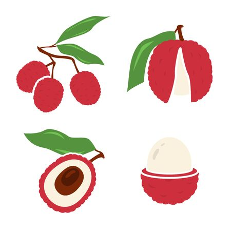 Vector illustration of lychee - tropical fruit. Modern flat style. Summer food.