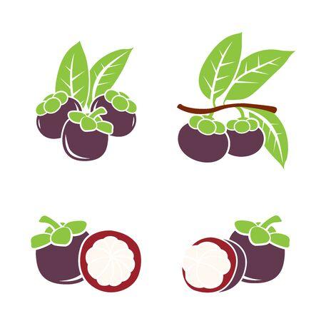 Fresh Mangosteen Mangosteen. Vector illustration. Illustration